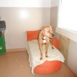 Hundezimmer mit Couch