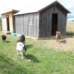 Stallungen für Ziegen und Enten