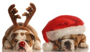 weihnachten_hund_web4